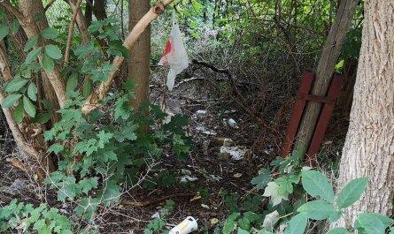 Müll im Gebüsch